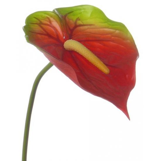 Anthurium bloem rood / groen 78 cm
