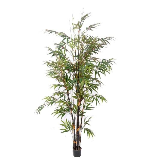 Bamboe bomen 190 cm