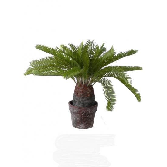 Cycas palm 40 cm