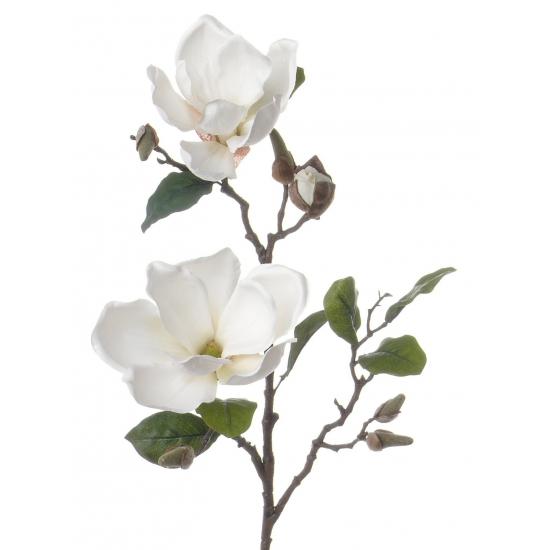 Magnolia takken wit