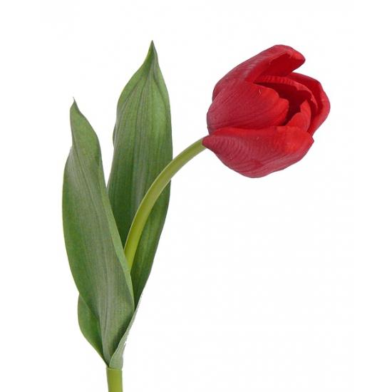 Tulp rood 48 cm