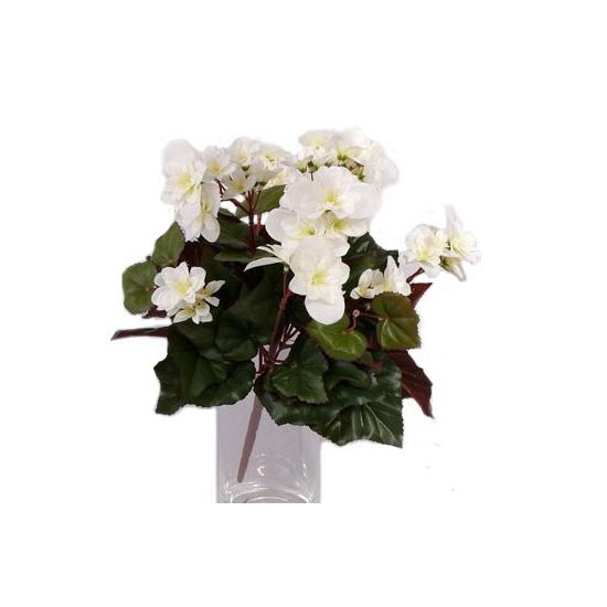 Witte Begonias in pot 30 cm